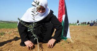 Conflicto palestino-israelí, 50 años de fracaso de la ONU
